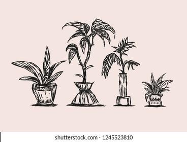 Illustration skech. Home garden
