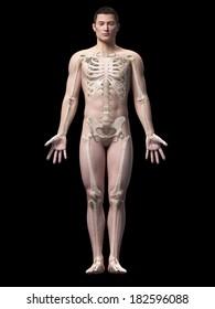 illustration of the skeleton of an asian male guy