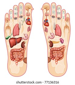 Illustration of the soles of the feet with the reflexology zones marked by