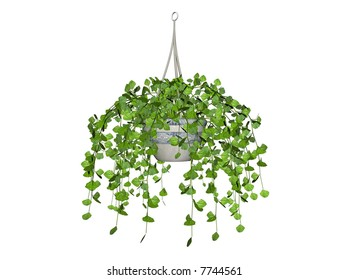 Illustration of a swedish ivy, a hanging plant