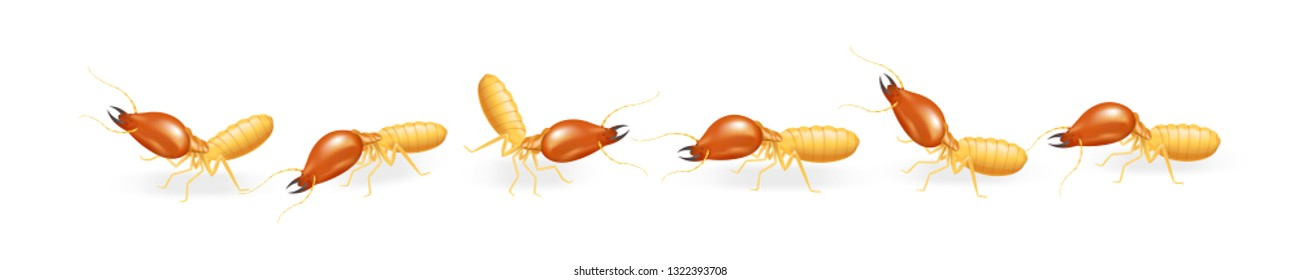 illustration termites walking in line isolated on white background, insect species termite ant eaten wood decay and damaged wooden bite, cartoon termite row clip art, animal type termite or white ants