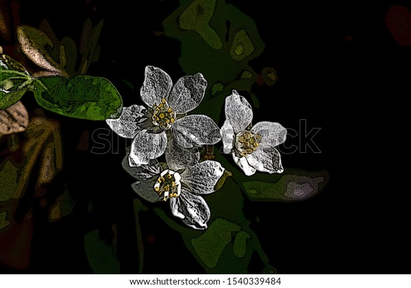 Illustration of Three White Flowers highlighted by sunlight on a dark garden background.