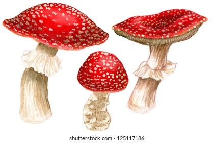Illustration of Toadstools