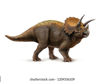 Illustration of a Triceratops with shadow