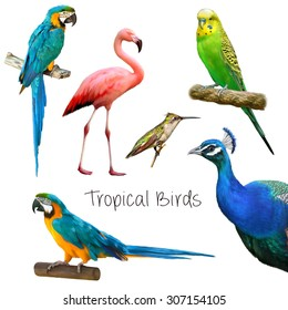 Illustration of tropical birds: parrots, peacock, green parrot, hummingbird, pink flamingo. Isolated on white background.