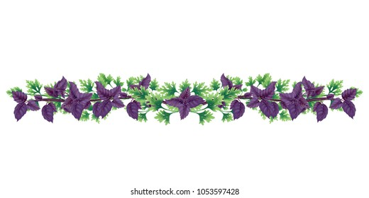 Illustration of vignette of parsley and basil. Garland of purple and green leaves isolated on white background.