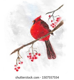 illustration watercolor bird red cardinal on branch with berries