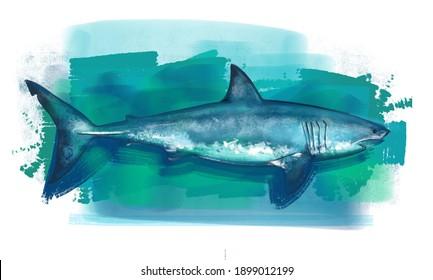 the illustration of a white shark