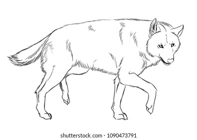 Illustration of a wolf walking