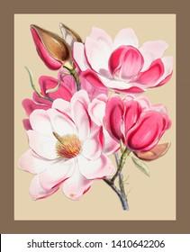 Illustrations of Himalayan plant manual artwork
