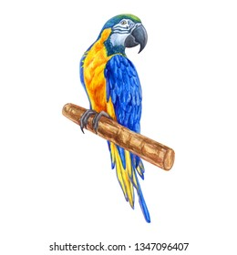 Image of a Blue-and-yellow-macaw, on a white background, isolated, realistic drawing from nature, hand-painted,  watercolor, element for design, prints of wallpapers, posters and more