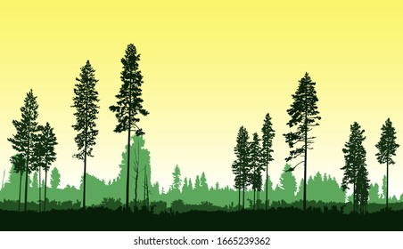 Image  landscape. Seamless woodland. Silhouette of coniferous trees. Yellow and green tones.