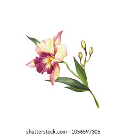 Image Orchids flowers. Hand draw watercolor illustration.