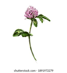 image of a stylized wildflower pink clover