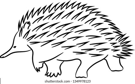 Image of a wild animal echidna. Coloring animal echidna