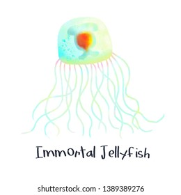 Immortal Jellyfish Animal Realistic Illustration