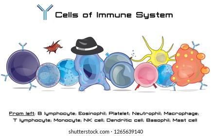 Immune cell army - cells of human immune system