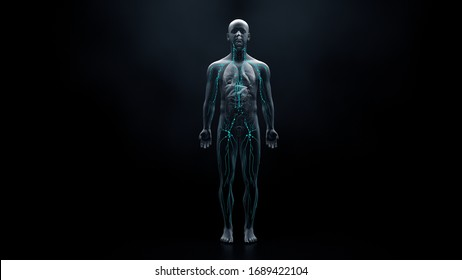 Immune system defends the body against infections and diseases 3d illustration
