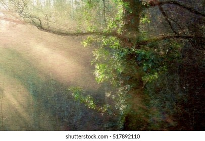 Impressionist illustration of rays of light in the forest, spring season, background, flowers, flower, nature, floral, garden, summer, beautiful, landscape, pink, blossom, white, tree, green, sun,