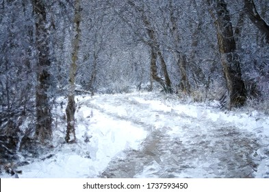 Impressionistic Style Artwork of a Snow Covered Trail Winter Forest