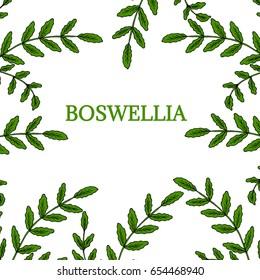 Indian Frankincense Salai or Boswellia serrata vintage illustration, round frame.Olibanum-tree (Boswellia sacra), aromatic tree. Ink hand drawn herbal illustration.