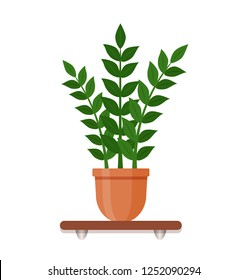 Indoor gerb on shelf isolated on a white background. Houseplant in a pot in flat style. Living room design decoration element.