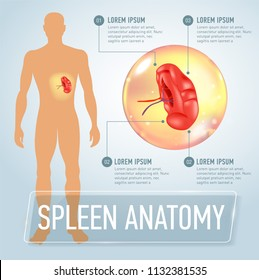 Infographic poster with spleen illustration and medical icons
