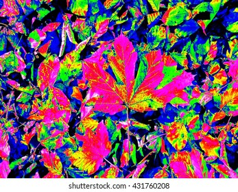 Infrared scan of leaves on park ground. Maple and chesnuts leaves in changed colors. Temperature measurement.