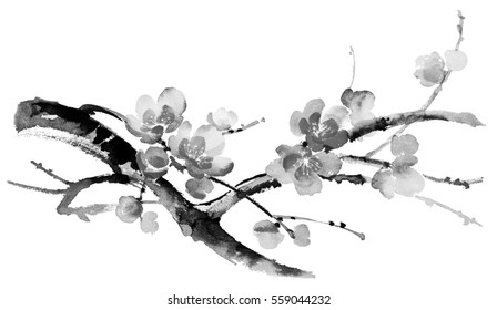Ink illustration of blooming branches of cherry tree. Sumi-e, u-sin, gohua painting style. Silhouette made up of brush strokes isolated on white background.