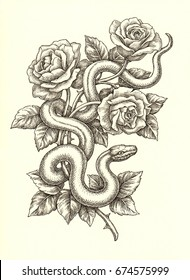 Ink and pen drawing, snake and roses on white background.