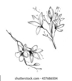 Pencil Drawing Flower Hd Stock Images Shutterstock