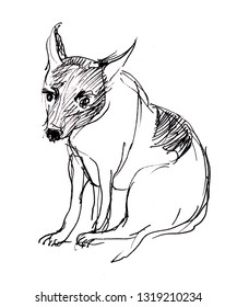 Instant sketch, sitting little dog, black and white