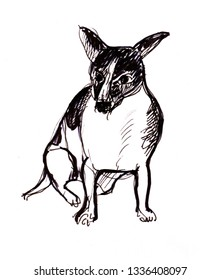 Instant sketch,little dog sitting oj floor, black and white