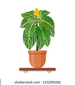 Interior gardening decor. Houseplant in a pot in flat style. Indoor gerb on shelf isolated on a white background.