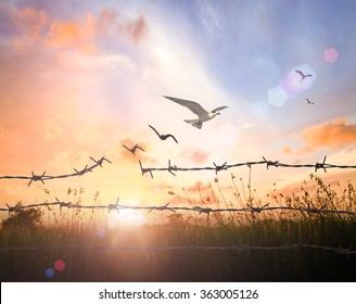 International human rights day concept: Silhouette of bird flying and barbed wire at autumn sunset background