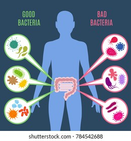 Intestinal flora gut health concept with bacteria and probiotics icons. Human flora good and bad microorganism illustration