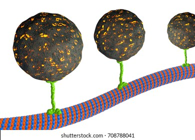 Intracellular transport, kinesin motor proteins transport molecules moving across microtubules isolated on white background, 3D illustration