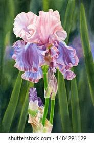 Iris Florentine Silk with Leaves