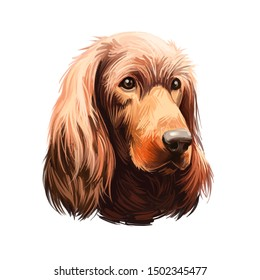 Irish Setter, Red Setter, Irish Red Setter dog digital art illustration isolated on white background. Irland origin sporting gundog dog. Pet hand drawn portrait. Graphic clip art design for web, print