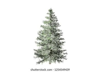Isolate Christmas Snow Winter Trees