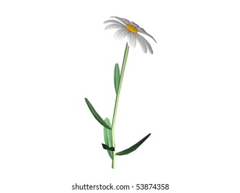 Isolated 3D Illustration of a daisy