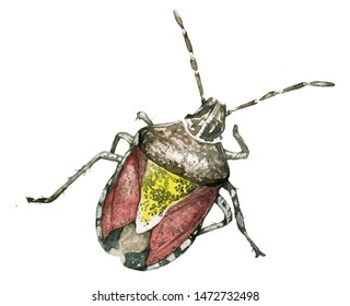 Isolated bedbug. Hand drawn in watercolor one isolated bedbug on white background