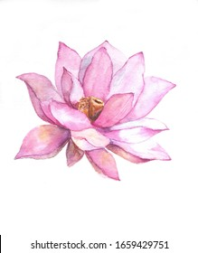 An isolated big lotus flower painted in watercolor