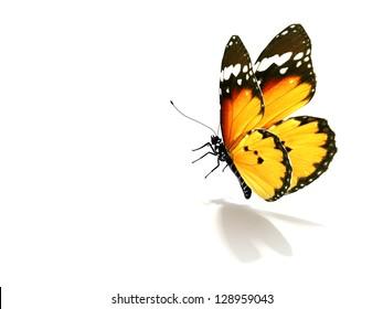 Schmetterling einzeln