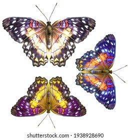 Isolated butterfly on the white background with path. Textile element design.