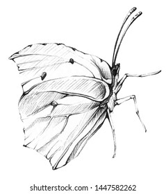 Isolated ButterflyLemon. Hand drawn in pencil one isolated lemon butterfly on white background