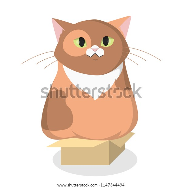 Isolated cartoon fat cat in box on white.
