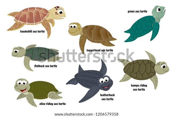 Isolated cartoon sea turtle collection (Leatherback, Loggerhead, Kemp's Ridley, Green, Olive Ridley, Hawksbill, and Flatback).