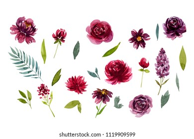 isolated claret flowers and leaves, watercolor