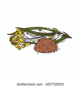 Isolated clipart of plant Camelina sativa on white background. Botanical drawing of herb False flax with flowers and leaves, seeds. Raster version of illustration
